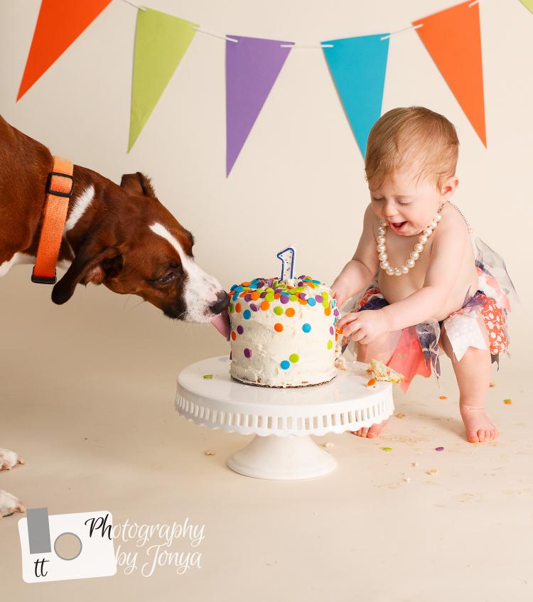 Cake smash photo shoot with child and dog